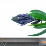 Flowers Blossom in Alive Biofeedback Game